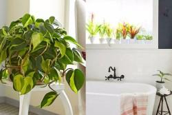 ไอเดียเลือกต้นไม้ สำหรับปลูกในห้องน้ำ ปลูกได้แบบไร้กังวลแม้อับแสง